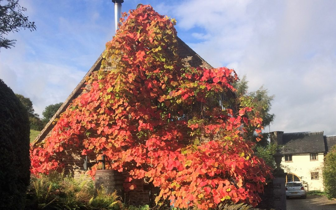 Autumn Colour at The Gatehouse Pooh Hall