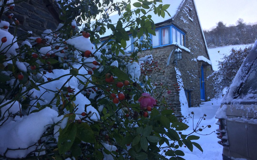 Roses and snow outside The Gatehouse Pooh Hall